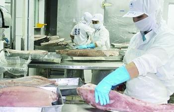 Doanh nghiệp thủy sản vướng mắc vì kiểm dịch