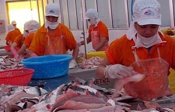 Đơn hàng giảm mạnh, doanh nghiệp cá tra đang nỗ lực vượt qua khó khăn