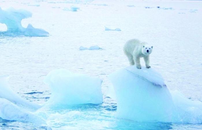 Tiếng kêu cứu từ Bắc Cực