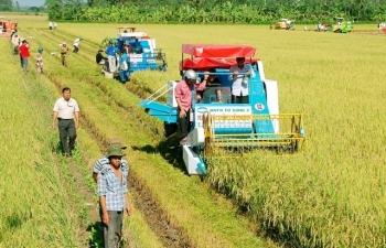 Xuất siêu nông sản tăng gần 50% bất chấp dịch Covid-19