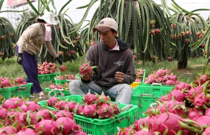 Xuất khẩu rau quả sang Trung Quốc giảm gần 30%